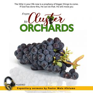 from cluster to orchards